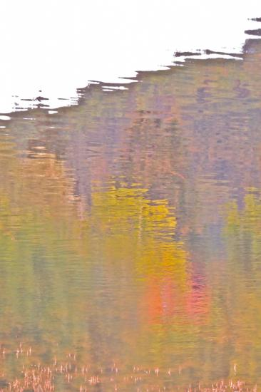 77275641-Flamboyance