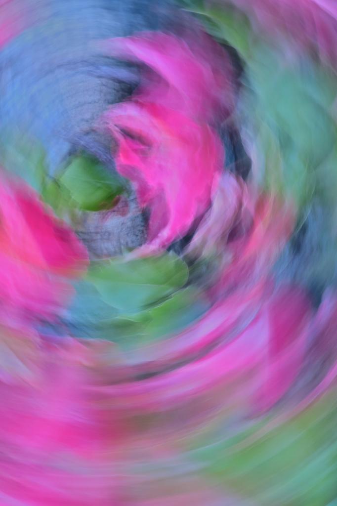 8A146307-Rose fou-Crop circle