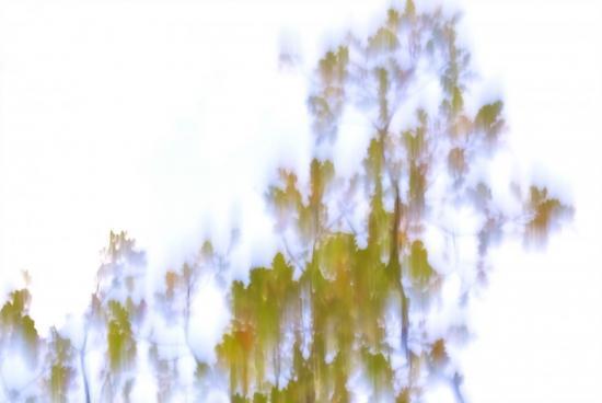 8A243080-Ciel de brume