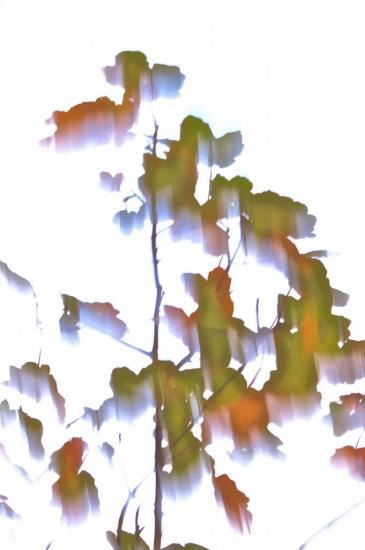 8A245143-Ciel d'automne