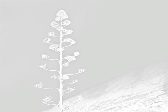 8C160498-Plante cosmique !