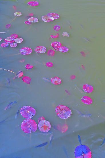 95257119-Pétales de rose !