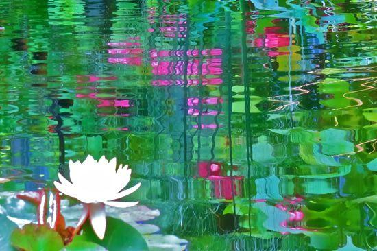 96298871-La sérénité du Lotus