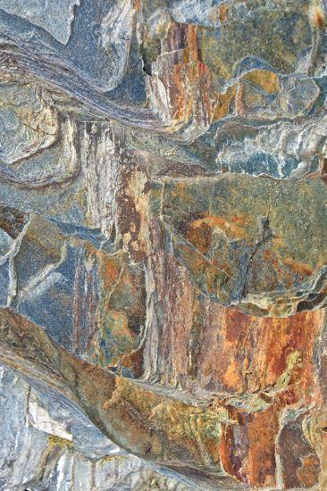 98136111-L'Arche de Noé