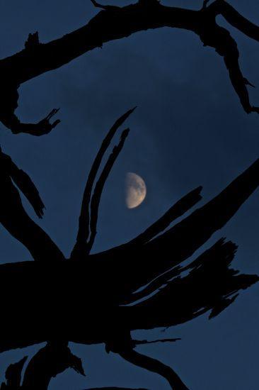 """99137260-Musset : """"Ballade à la lune"""""""