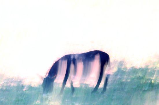 99271427-L'âne et son fantôme