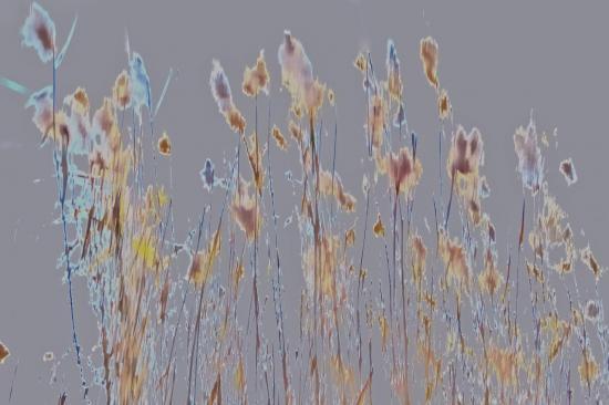 9C011832-Bouquet champêtre