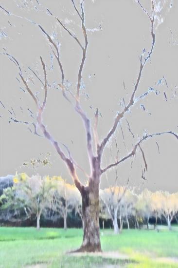 9C012039-Forêt d'Energie...