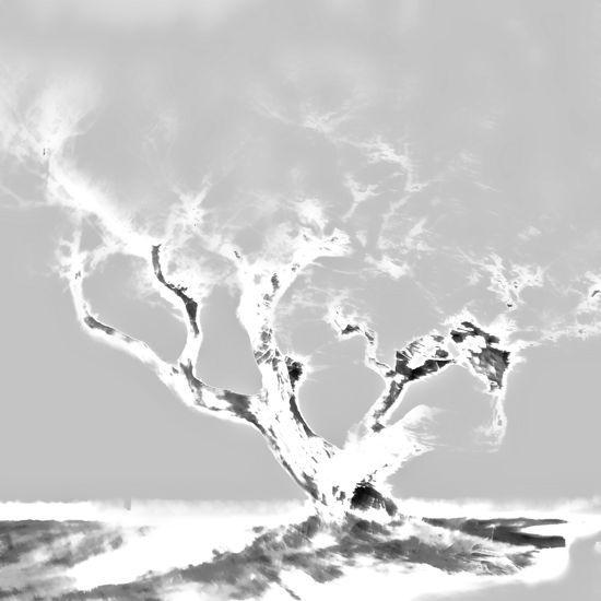 A3014465-La légende du chêne noir...