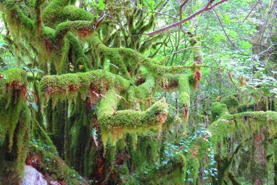 B6116902-Forêt mystique 2
