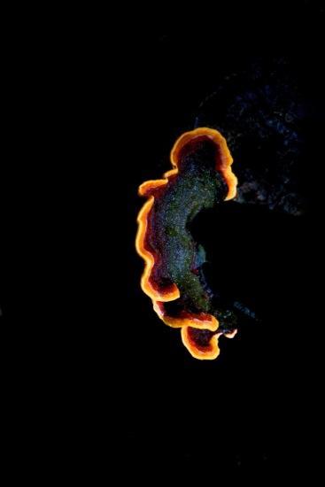 BA147915-Terre brulée
