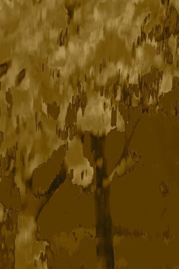 BB074700-L'arbre de coton