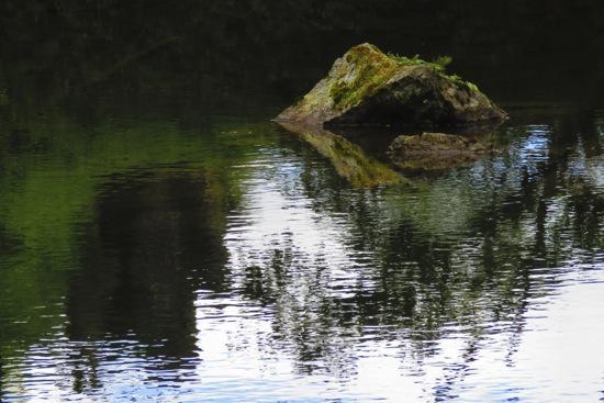 C5230415-La grenouille de La Fontaine !