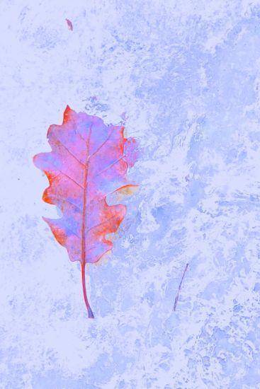 D1262947-Ciel d'automne !