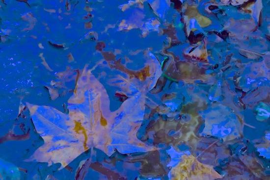 D3100240-Mélange des saisons