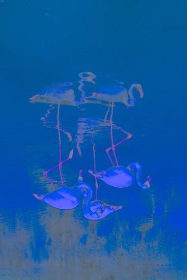 D3110674-Les flamants bleus