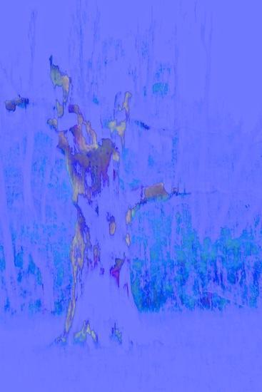 D4305072-La Ste Baume : le chêne personnifié