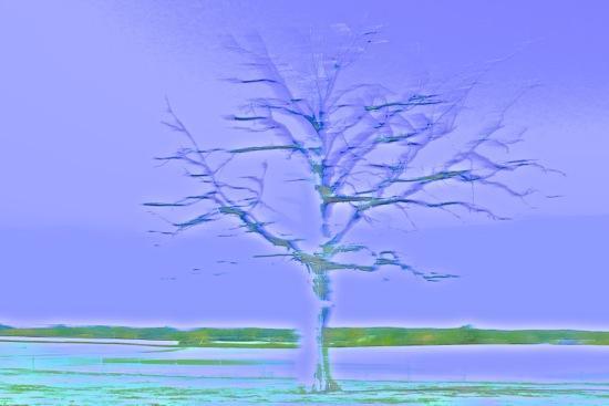 E9169926-Envolée lyrique