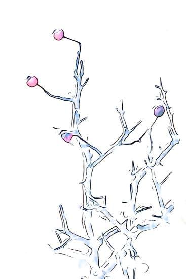 EC285096-Fruits d'hiver 1