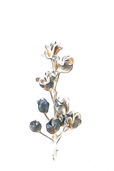 F1015856-Fleur d'hiver 7