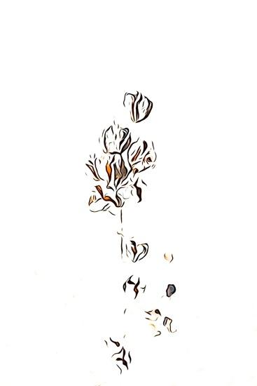 F2243117-Fleur d'hiver