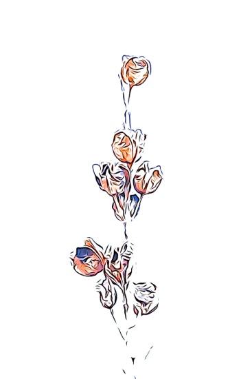 F2243125-Fleur d'hiver