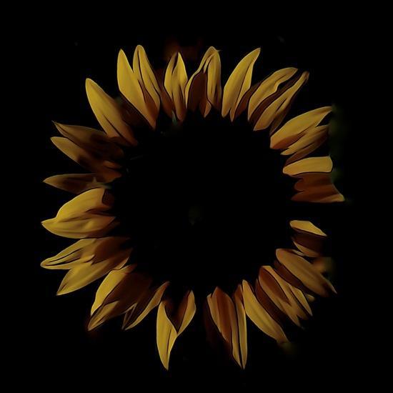 F7062951'-Soleil de minuit
