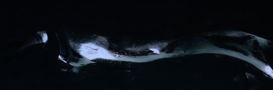 F8309901-Venu des abysses