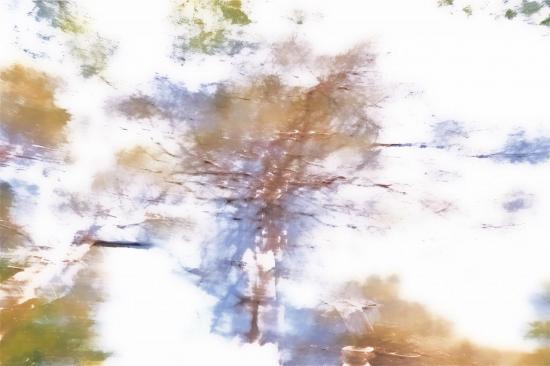 908-11-4881.jpg : The Sound of Silence