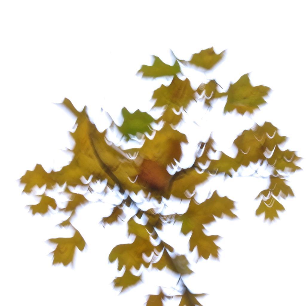 8A245454-Les feuilles mortes...
