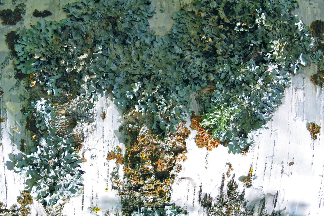 95123907-Comme un arbre dans la ville...