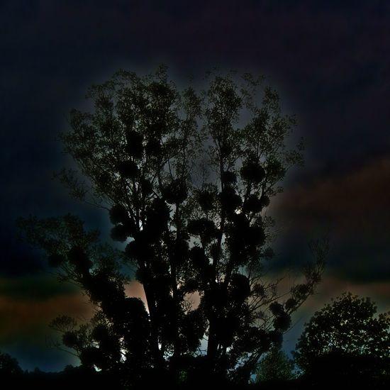 95267204-Coeur ardent