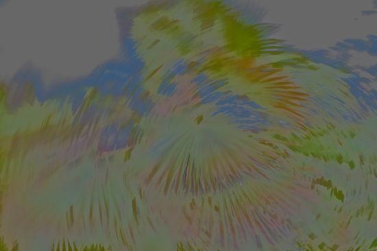 96131450-Rêve de palmier