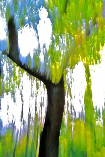 97279439-L'arbre peint