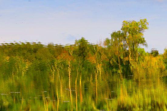99260943-La forêt engloutie