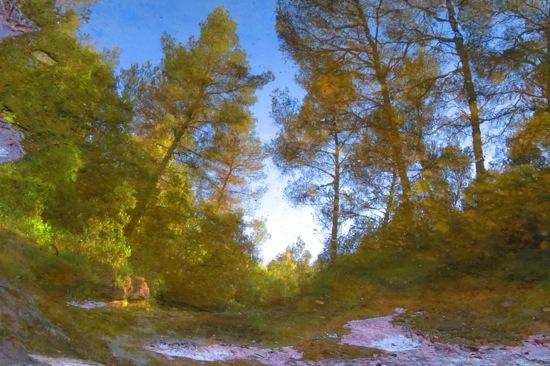 A6118223-La forêt engloutie !