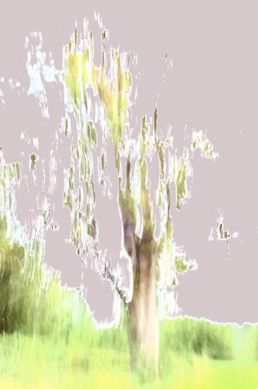 A8267498-Comme l'arbre n'atteindra jamais le ciel...