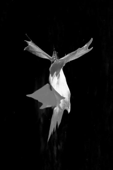 A9204307-Un ange passe...