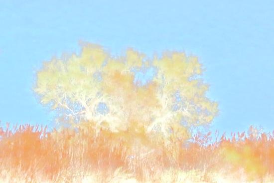 AB233376-Camargue d'automne