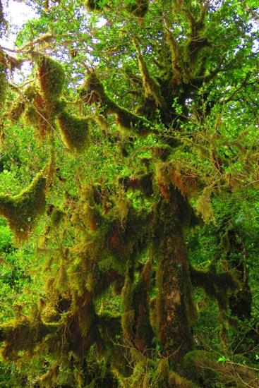 B6116793-Forêt mystique
