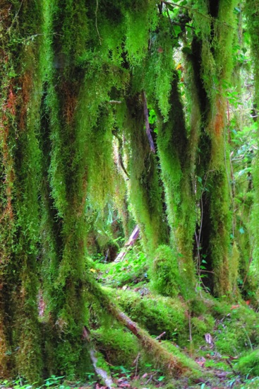 B6116917-Forêt mystique 3
