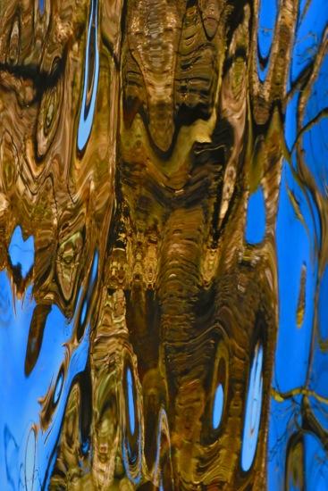 B6263510-Les éléphants sacrés...