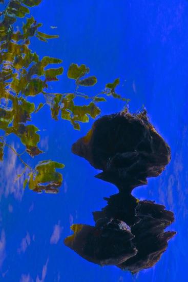 C8168745-Le nounours du Lac