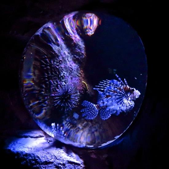 C9143386-Mystère aquatique