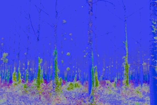 CA141205'-La forêt enchantée