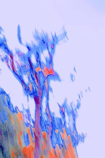CA222896A-L'arbre des songes...