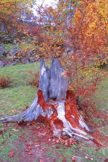 CB025466-L'arbre qui saignait...
