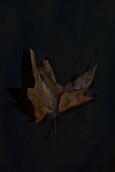 D2260196-Origami !