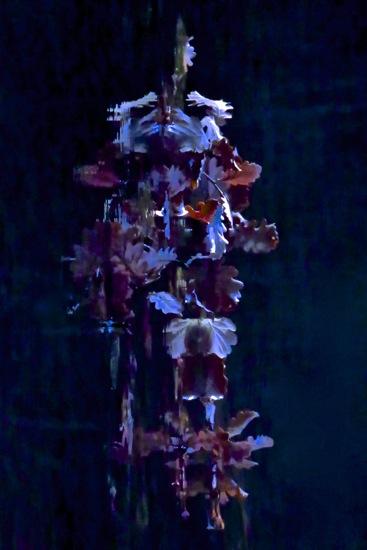 D3162168-Composition florale