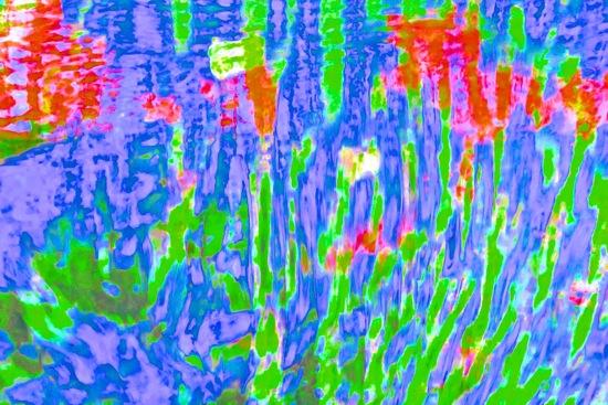 D4223010-Van Gogh : Les Coquelicots !